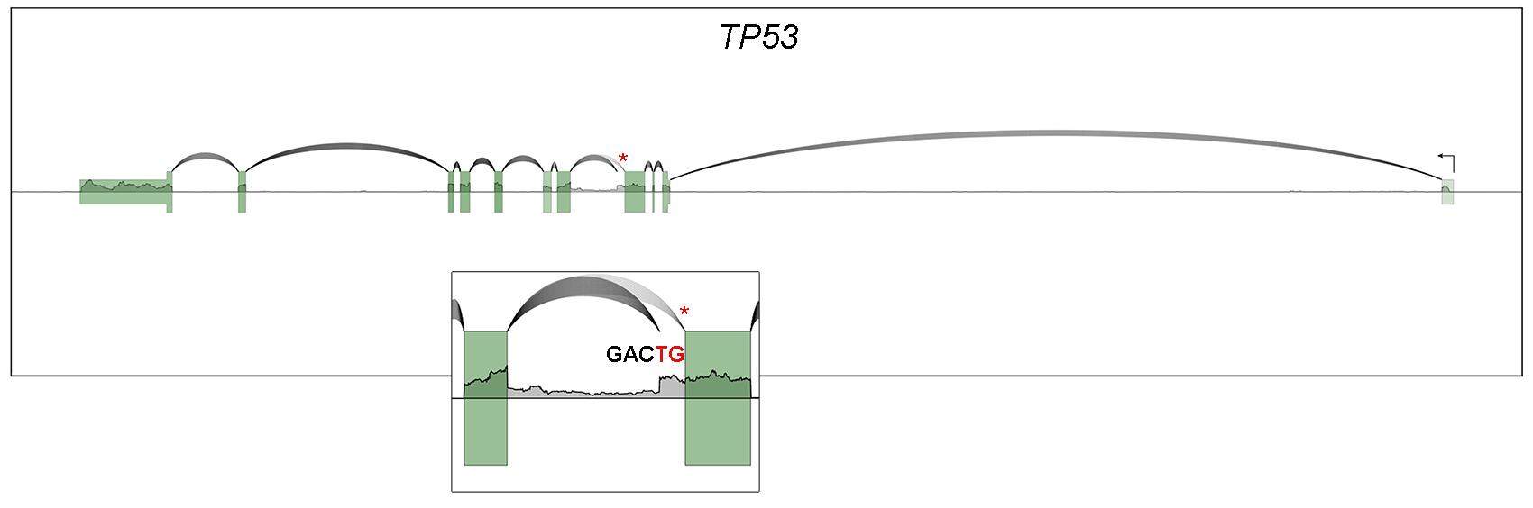 TP53 SpliceV plot